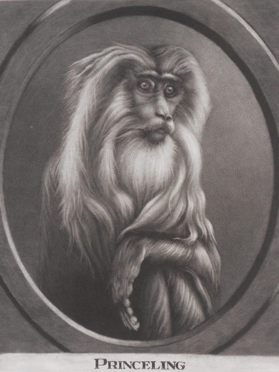 Ифа Лейтон (Aoife Layton). Обезьяна Старого Света (Old World Monkey)
